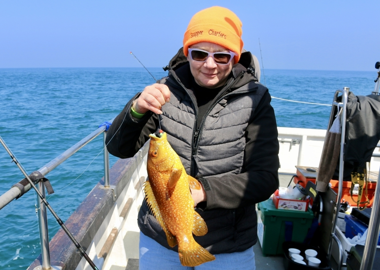 orange coloured wrasse alderney fishing trip