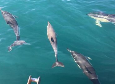 pod of dolphins in weymouth