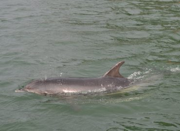 dolphin in weymouth harbour