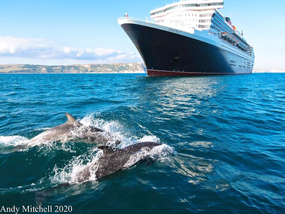 dolphins cruise ships weymouth
